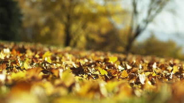 vidéos et rushes de cu r/f autumn leaves in park / provo, utah, usa - provo