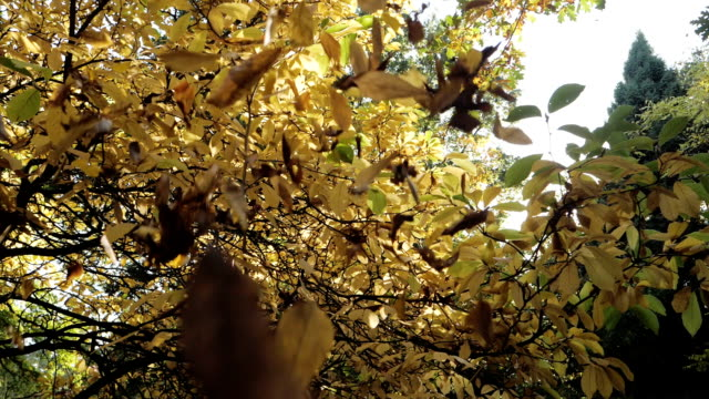 Autumn Leaves in Slow Motion