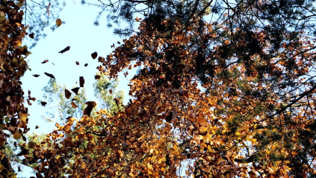 autumn leaves in slow motion - weather stock videos & royalty-free footage
