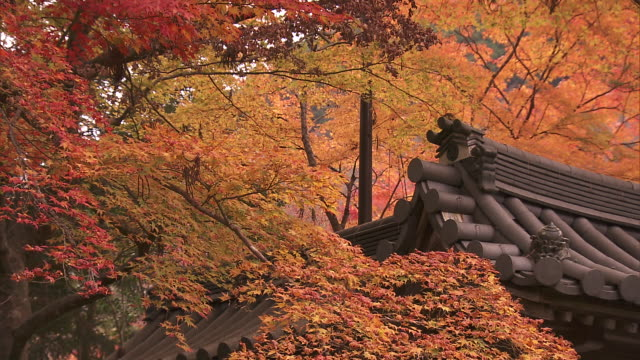 Autumn leaves in the grounds of Saimyoji Temple Roof and trees in autumn foliage Saimyoji is a quiet Buddhist temple nestled in the hills of Kyoto's...