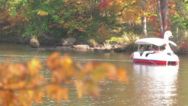 autumn leaves in the onuma quasi-national park - pedal boat stock videos and b-roll footage