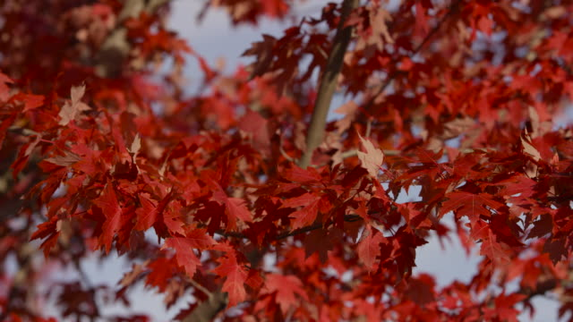 autumn leaves in the wind - fatcamera stock videos & royalty-free footage