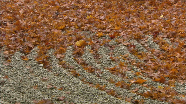 Autumn leaves lie on the graveled ground.