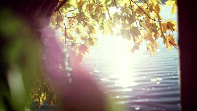 vídeos de stock e filmes b-roll de autumn leaves on a lakeshore. sun shining between tree trunks - reflection
