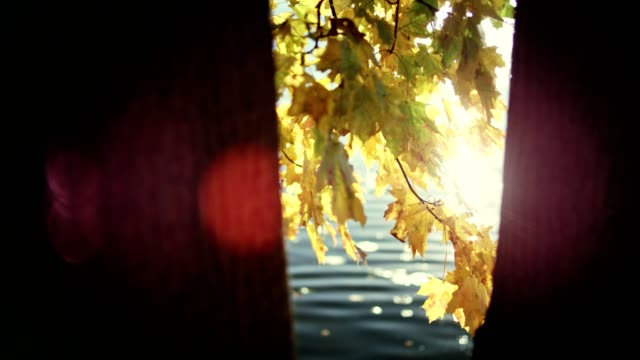 autumn leaves on a lakeshore. sun shining between tree trunks - lakeshore stock videos & royalty-free footage
