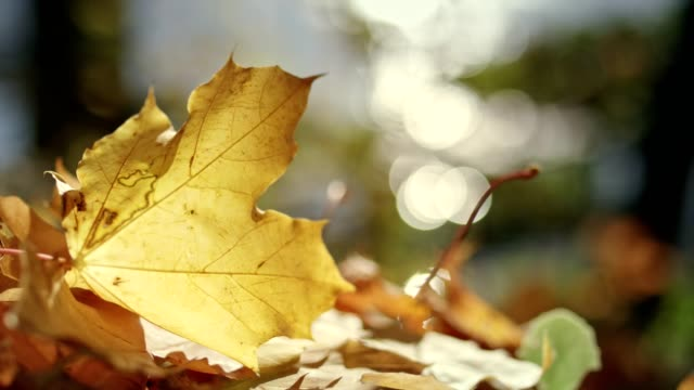autumn leaves on a sunny day - season stock videos & royalty-free footage