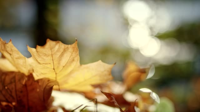 autumn leaves on a sunny day - bare tree stock videos & royalty-free footage