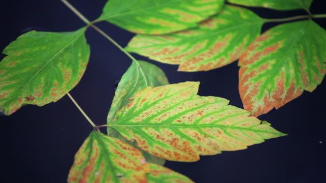 HD feuilles d'automne sur l'eau