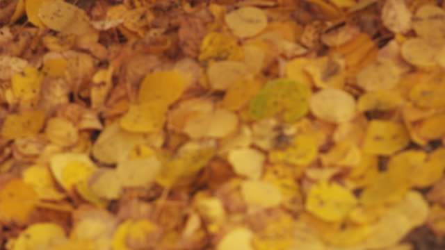 vídeos de stock, filmes e b-roll de autumn leaves on ground, close up - sc47