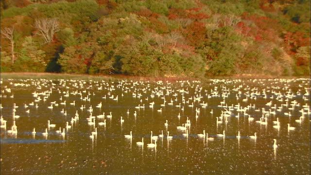 autumn leaves on mt. takadate - water bird stock-videos und b-roll-filmmaterial