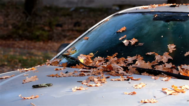 autumn leaves on the car. - parking stock videos & royalty-free footage