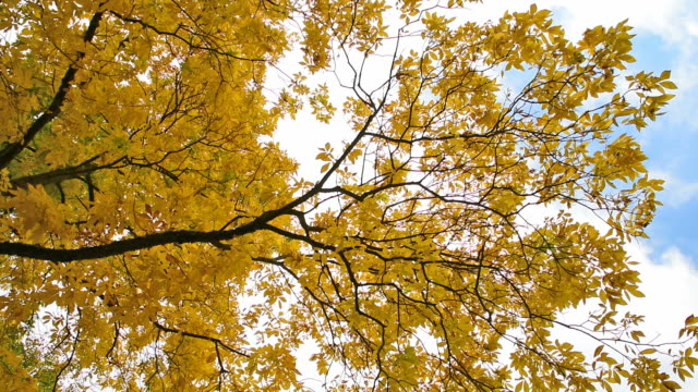 Autumn leaves on the tree Bacground