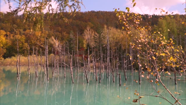 autumn leaves reflected on the turquoise blue surface of the shirogane blue pond - biei town stock videos & royalty-free footage