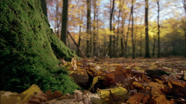 Autumn leaves surround a mossy tree trunk.