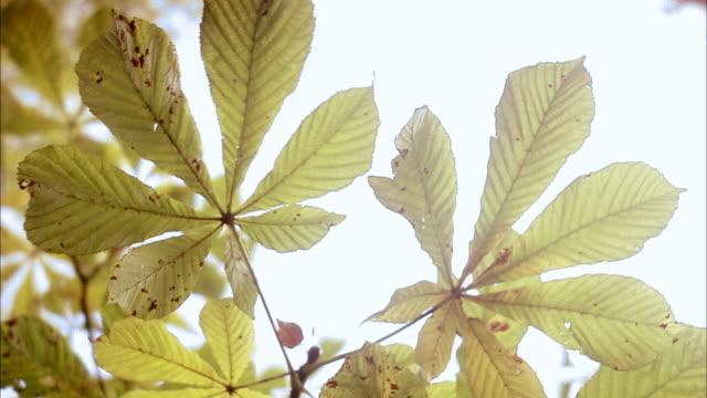 vidéos et rushes de autumn leaves sweden. - marron couleur