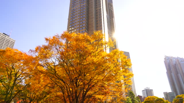 autumn leaves trees stand at front of the tokyo metropolitan government building and other high-rise buildings at shinjuku subcenter nishi-shinjuku, tokyo japan on november 24 2017. - month stock videos & royalty-free footage