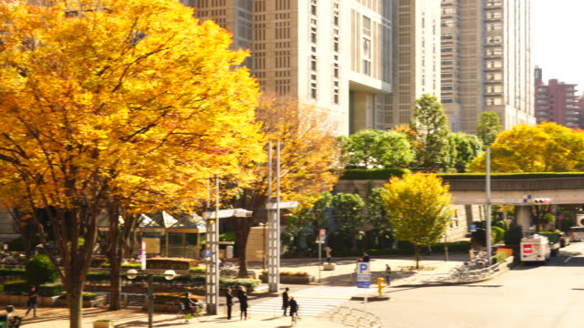 autumn leaves trees stand at the corner of the tokyo metropolitan government building intersection and other high-rise buildings at shinjuku subcenter nishi-shinjuku, tokyo japan on november 24 2017. people cross the intersection and cars run on street. - local government building stock videos & royalty-free footage
