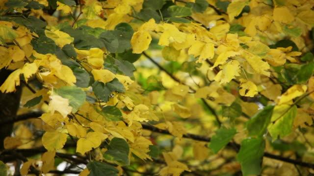 Herbstmuster