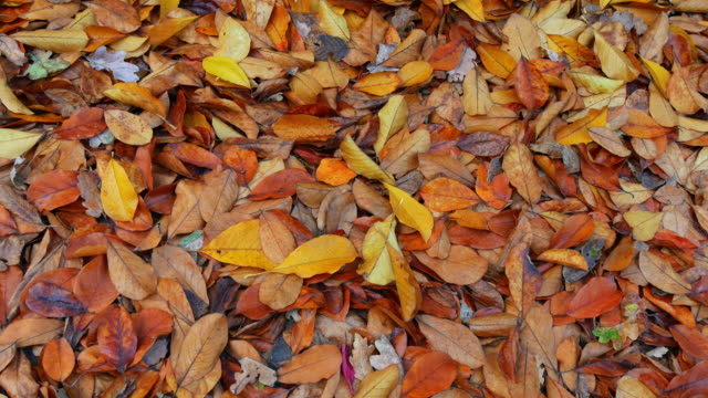 autumn leaves - rhineland palatinate stock videos & royalty-free footage