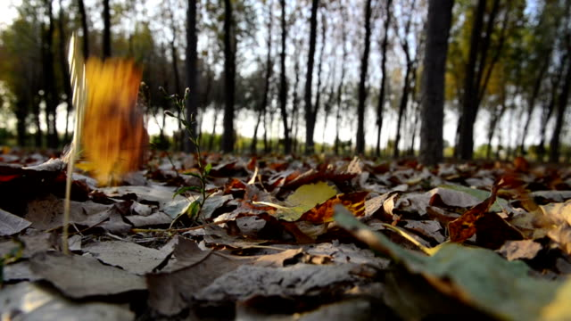 stockvideo's en b-roll-footage met series: autumn leaves - opeenvolgende serie