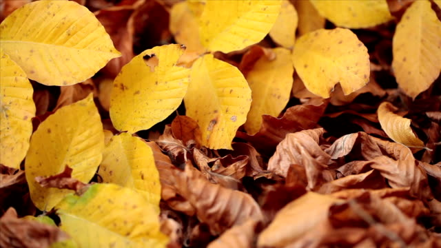 HD: Autumn Leaves