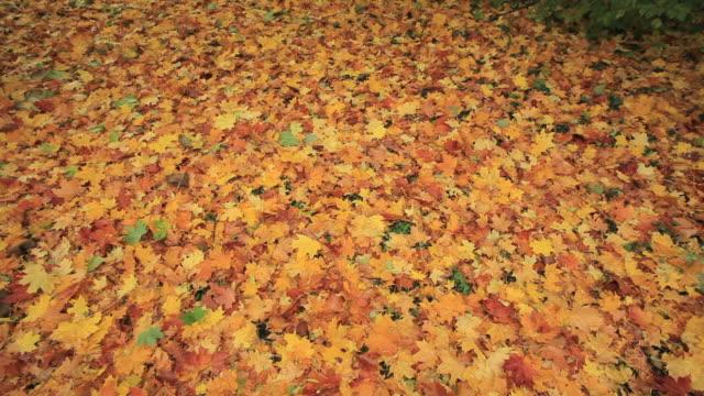 foglie d'autunno - novembre video stock e b–roll