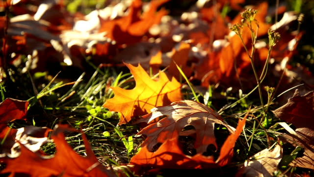 autumn leaves - autumn stock videos & royalty-free footage