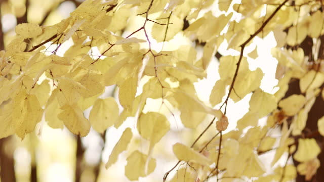 autumn leaves - hoozone stock videos and b-roll footage