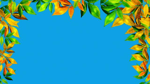 vídeos y material grabado en eventos de stock de hojas otoñales - calabaza no comestible