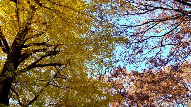 vídeos de stock, filmes e b-roll de folhas de outono  - plusphoto