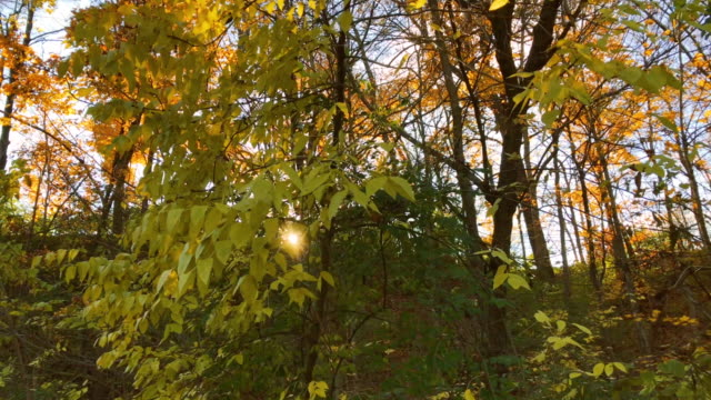 autumn leaves - deciduous stock videos & royalty-free footage