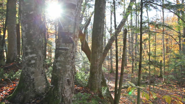 autumn light - named wilderness area stock videos & royalty-free footage