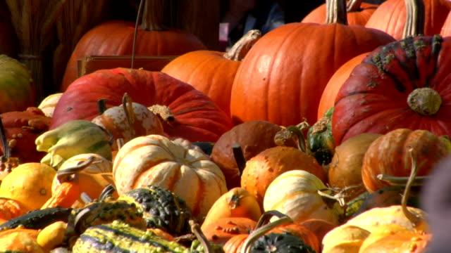 autumn market - kurbits bildbanksvideor och videomaterial från bakom kulisserna