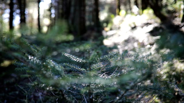 autumn morning in the forest - named wilderness area stock videos & royalty-free footage
