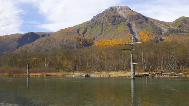 vidéos et rushes de autumn mountain and river from kamikochi - arbre sans feuillage