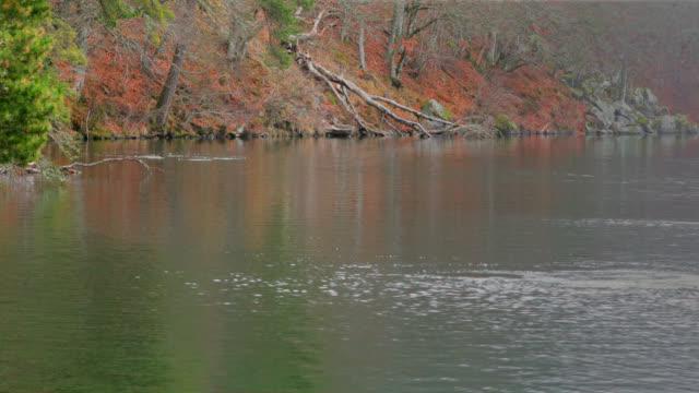 autumn nature and lake - auvergne rhône alpes stock videos & royalty-free footage