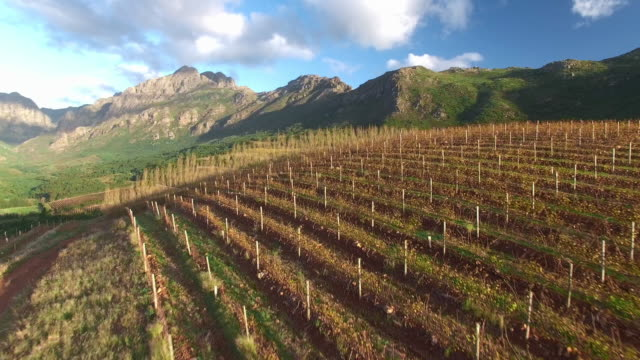 autumn over the vineyards - cape town stock videos & royalty-free footage