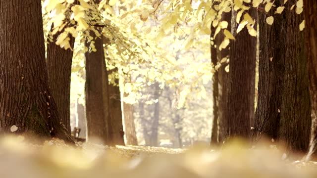 autunno parco - alberato video stock e b–roll