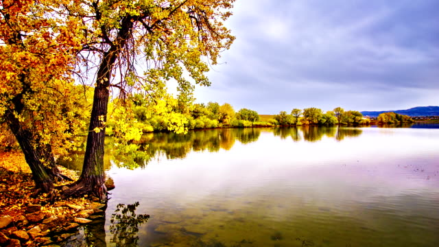 autumn pond. - riverbank stock videos & royalty-free footage