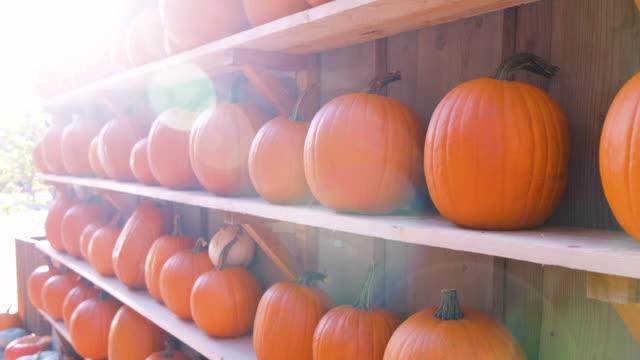 vídeos y material grabado en eventos de stock de calabazas de otoño - calabaza no comestible