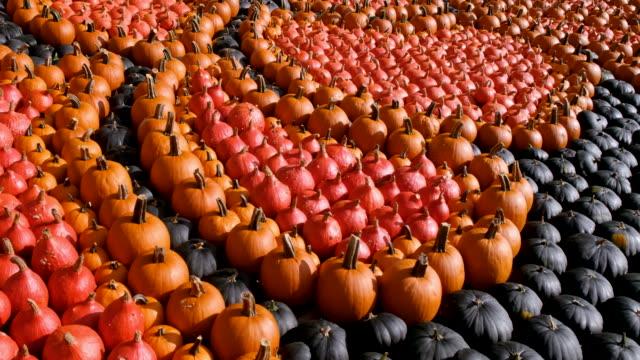 autumn pumpkins - zucca legenaria video stock e b–roll