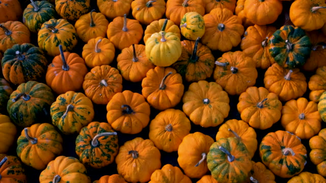 autumn pumpkins - gourd stock videos & royalty-free footage
