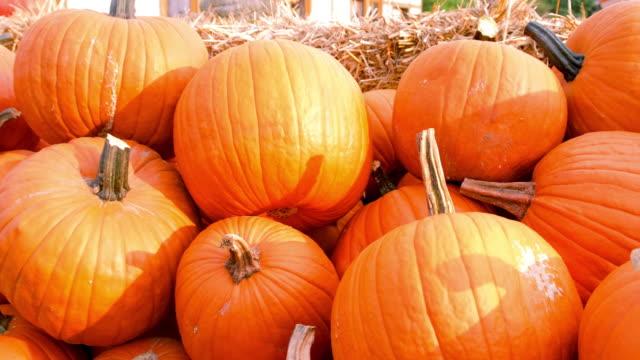 autumn pumpkins - pumpkin stock videos & royalty-free footage