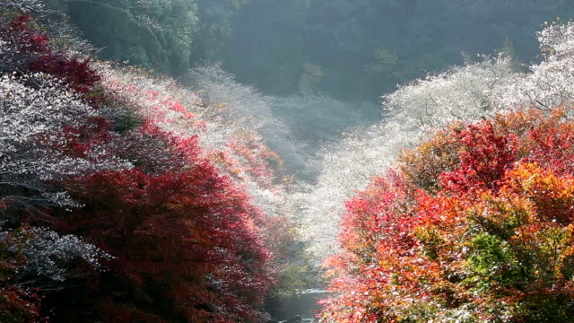 autumn red leave obara toyota nagoya japan - autumn leaf color stock videos and b-roll footage