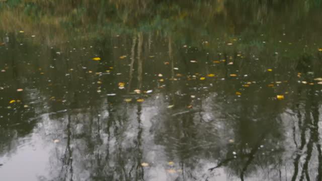 autumn river stream - river lagan stock videos & royalty-free footage