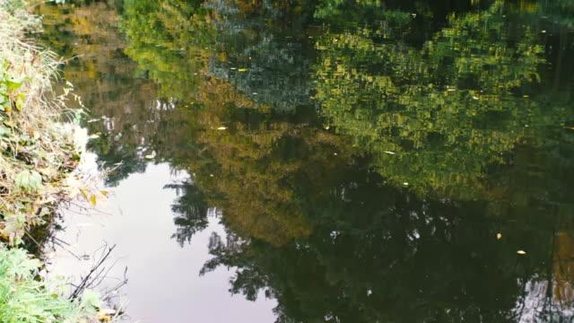autumn river,northern ireland - river lagan stock videos & royalty-free footage