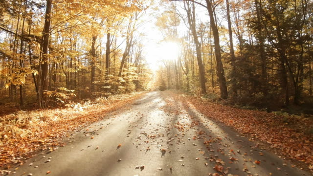 autumn road in the white mountains of new hampshire - treelined stock videos & royalty-free footage