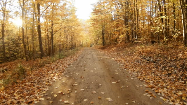autumn road in the white mountains of new hampshire - strada in terra battuta video stock e b–roll