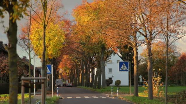 CRANE DOWN: Autumn Road