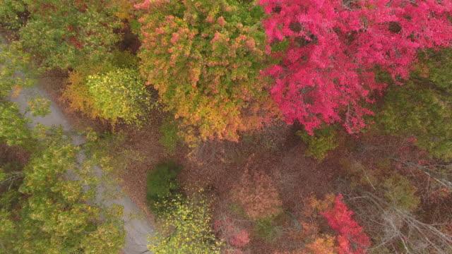 11 月の秋の道 - シャーロッツビル点の映像素材/bロール
